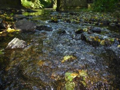Gewässerpfad Orke Medelon