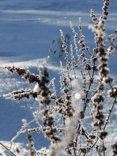 Winterwandelroute Winterkopf (Wandelrondweg 7) Medebach