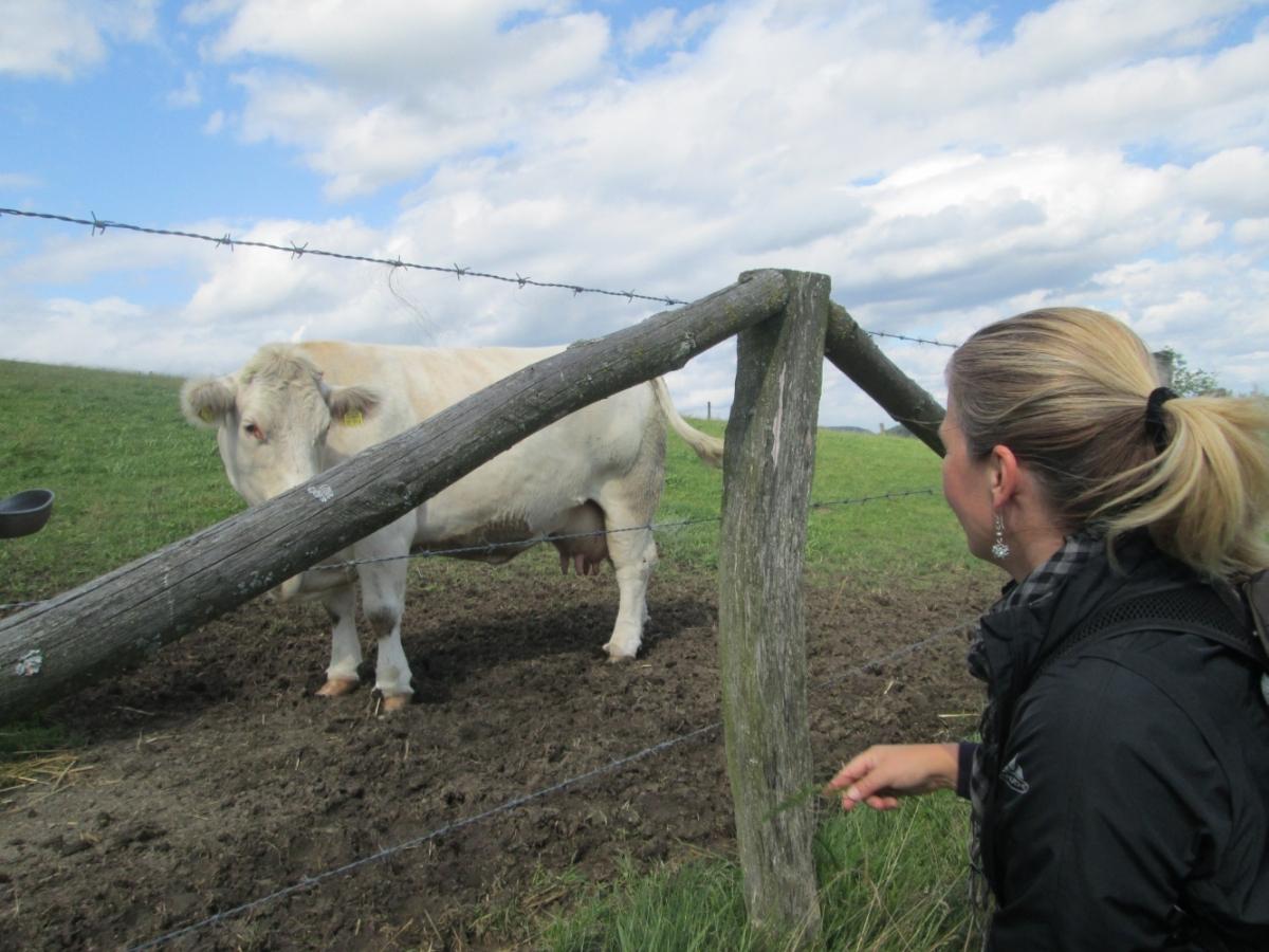 In Medebach-Referinghausen gibt es mehr Kühe wie Einwohner