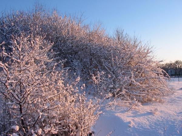 Winterwandern in Titmaringhausen